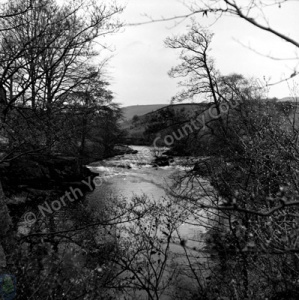 River Wharfe, Haugh Woods, 1967
